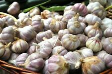 PACK OF 10 -'LAUTREC WIGHT'GARLIC SEEDS  BULBS- PLANTING NOW–100+++GARLIC CLOVES