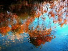 ART PRINT POSTER PHOTO TREE REFLECTED LAKE WATER RIPPLES LFMP0516