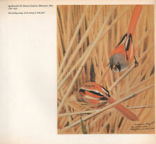 BEAUTIFUL VINTAGE BIRD PRINT ~ BEARDED TIT ~ HEN FEEDING YOUNG MALE WITH FOOD