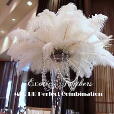 "WHITE OSTRICH FEATHERS 25 pcs 12/14"" Long Natural feathers by Exotic Feathers"