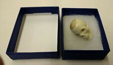 Human Skull Hand Carved Deer Antler in gift box - Taxidermy Gothic Steampunk