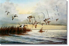 """WHERE THE CANVASBACK IS KING"" LIMITED EDITION PRINT BY BOB ELGAS"