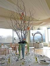 25  Dried  Corkscrew curly Willow Branches 2-3 Ft Perfect for COUNTRY DECORATING