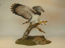 17 inch Harpy Eagle Original Wood Carving