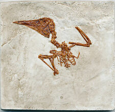 SMALL FOSSIL BIRD