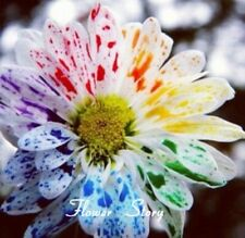 50 pcs Water Color Daisy Seeds Lovely rainbow flower seeds