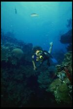 156005 Scuba Diver And Pacific Sea Fans A4 Photo Print