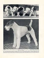 WIRE FOX TERRIER NAMED DOG AND PUPPIES OLD DOG PRINT FROM 1934