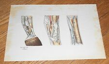 1899 Antique Print Anatomy of Horse's Foot Anatomical Manikin with Lift-Up Parts