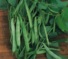 Vegetable - Dwarf French Bean - Masterpiece - 10 Seeds - Economy