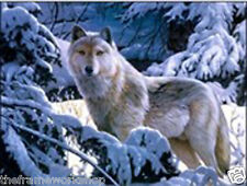 WOLF IN SNOW - 3D LENTICULAR MOVING PICTURE POSTER 400mm X 300mm (NEW)