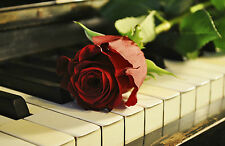 Framed Print - Red Rose Laying on Piano Keys (Flower Music Picture Poster Art)