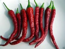 10 KASHMIRI CHILI  (Pepper Seeds) Famous Indian Paprika -A must grow.Very Rare