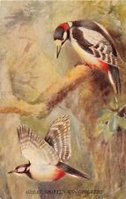 BRITISH BIRDS IN FLIGHT PYCRAFT & GREEN POSTCARD 1910s GREAT SPOTTED WOODPECKERS