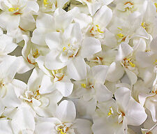 "10pc rice white 3.1"" cymbidium orchids home garden wedding DIY decoration U"