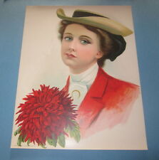 Old Vintage 1906 - Antique VICTORIAN PRINT - Lady - RED ASTER - FLOWER