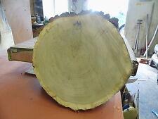 Baumscheibe, Holzscheibe, 40 x 10 cm, Eiche