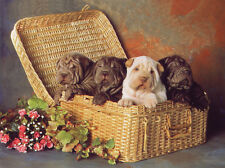 SHAR PEI CHARMING DOG GREETINGS NOTE CARD FOUR CUTE PUPS IN HAMPER
