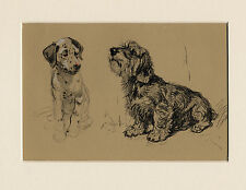 DANDIE DINMONT TERRIER & DALMATIAN PUP OLD CECIL ALDIN DOG ART PRINT MOUNTED