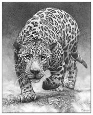 Wildlife Jaguar wall art picture animal panther poster sketch drawing Jag print
