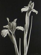 Art Photo Print Lydia Cutter Floral Journey I B&W Iris Flowers Square Litho