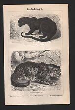Lithografie 1897: Pantherkatzen I/II. Jaguar Schwarzpanther Irbis Leopard