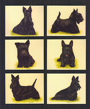 CIGARETTE/TRADE/CARDS. Imperial. Dogs. SCOTTISH TERRIERS. (1999). (Set of 6)