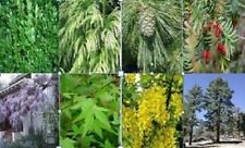 Mixed 40 x tree seeds. 5 of each variety.