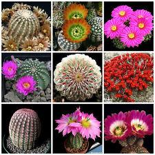 100 semi in miscuglio di Echinocereus mix ,piante grasse,seed cactus mix