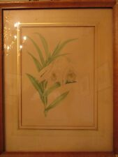 Framed Botanical Print by J.N. Fitch del Lith:  Thunia Veitchiana