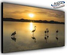 Flock on the Lake Panoramic Canvas Wall Art Print Framed XXL 55 inch x 24 inch O
