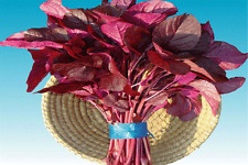 EDIBLE RED AMARANTH✿3000 Seeds✿Asian Chinese Greens Spinach✿Medicinal