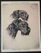 Kerry Blue Terrier     Large Vintage Twin Portrait Card # EXC