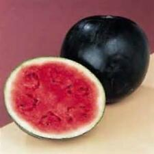 100 Seeds Sugar Baby Watermelon Seeds new seed for 2017 Heirloom Non-GMO