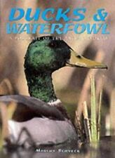 Ducks and Waterfowl (A Portrait of the Animal World)-ExLibrary