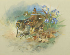 Thorburn Archibald Woodcock And Young Canvas 16 x 20   #5964