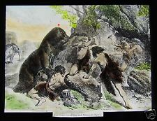 Glass Magic lantern slide ANCIENT MAN IN FIGHT WITH A BEAR 1928 ANTHROPOLOGY