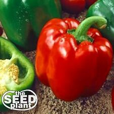 Keystone Resistant Sweet Bell Pepper Seeds 75 SEEDS-SAME DAY SHIPPING