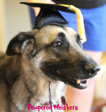 """Graduation cap/hat for medium sized dogs with 13-16"""" collar size"""