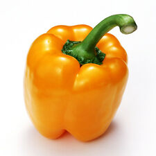 Orange Sweet Pepper Seed 8 Seeds Capsicum Frutescens Annuum Pimento Seeds C063