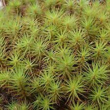 Hair Cap Moss ...... 200 Spores