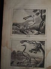 1798 NATURAL HISTORY OF BIRDS FISH INSECTS VOL ii - ORNITHOLOGY BUFFON