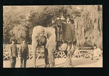 Belgium Antwerp Anvers Zoologique zoo Animals ELEPHANT ride c1900/10s?  PPC