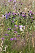 Wild Flower - Bees and Butterflies Meadow Seed Mix - 20g