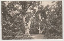Hampshire postcard - Bolderwood, King & Queen Oaks, New Forest