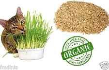 100% Pure Natural Oat Grass Seeds Cat Rabbit Pet +/- 10,000 Seeds