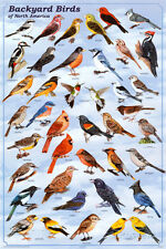 Backyard Birds Educational Science Chart Poster Poster Print, 24x36