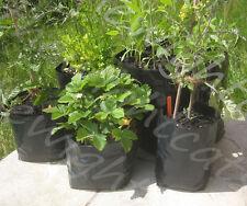 5x 40ltr POLY POT Grow Bag impianto contenitori 40L 40 Litro per le patate da Lampone