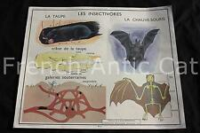 Ancienne affiche science Rossignol 3 4 Insectivore Chauve souris Taupe Chien
