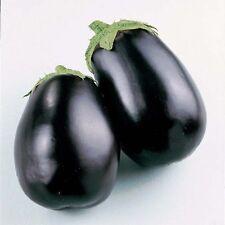 Black Beauty Brinjal Eggpalnt Vegetable Seeds 50 Seeds